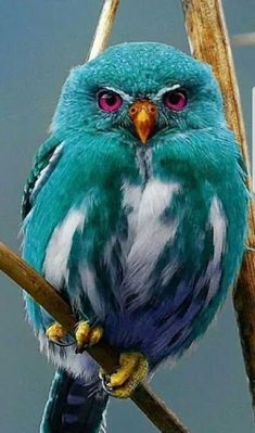 Owl: Tealus Photoshopensus ✿⊱╮ Eule: Tealus Photoshopensus ✿⊱╮ The post Eule: Tealus Photoshopensus ✿⊱╮ appeared first on Marcia Sterling. Cute Birds, Pretty Birds, Beautiful Birds, Animals Beautiful, Beautiful Pictures, Amazing Photos, Rare Animals, Animals And Pets, Funny Animals