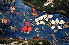 Leaves in a stream, Beech Grove Jack Corn, Photography Jack Johns, Beech Grove, Horse Mane, Fractals, Leaves, Horses, Day, Gallery, Photography