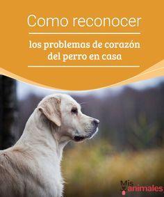 Como reconocer los problemas de corazón del perro en casa  Descubre los problemas de corazón que pueden afectar a tu perro y cómo detectarlos para poder darle una vida mejor a tu mascota. #corazón #problemas #alimentación #encasa