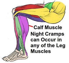 Night cramps can develop in any of the leg muscles but the calf muscle is the commonest. Original Graphic - janderson99