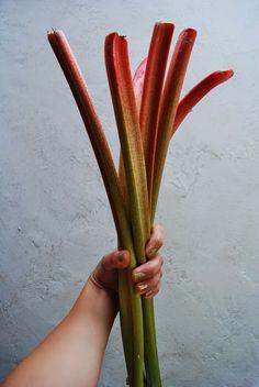 1 jour 1 idée: Idée #7 : faire une tarte à la rhubarbe, comme tou...