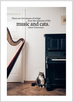 There are two means of refuge from the miseries of life: music and cats.  Albert Schweitzer