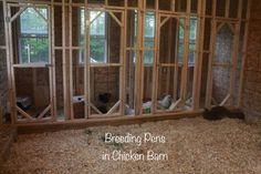 Indoor chicken breeding pens - All For Garden Walk In Chicken Coop, Chicken Barn, Chicken Chick, Chicken Coop Plans, Backyard Poultry, Backyard Chicken Coops, Chickens Backyard, Backyard Ideas, Chicken Coop Designs