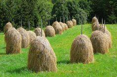 Hay Poles by Tapio Hurme, via Flickr