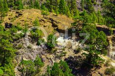 Qdiz Stock Photos Forest on Mounains on Tenerife Island