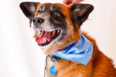 Novembro Azul: cães também devem prevenir câncer de próstata
