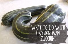 What to do with overgrown zucchini (recipe for puree and powder)