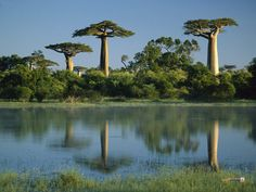 The Baobab trees in Madagascar (not to mention the lemurs and other flora and fauna unique to the island).