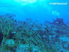 "The reef ""Las Jardines"" #tourguidekay   #tourguide   #playadelcarmen   #tulum   #cancun   #traveltips   #privatetours   #mexico   #privatetourguide   #diving"