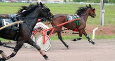 Illinois State Fair activities: Harness racing