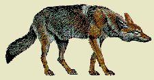 Blackfeet Legend of the Crazy Dog Society