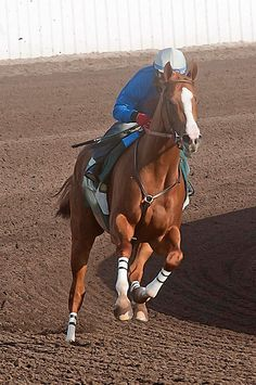 california chrome picture   California Chrome was bred by Perry Martin and Steve Coburn.