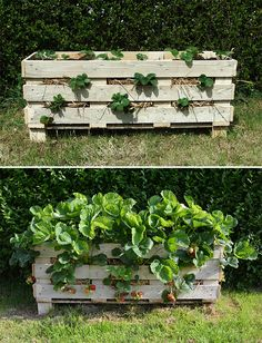 another palette project from * Lovely Greens *: How to Make a Better Strawberry Pallet Planter possibility for a larger balcony could be placed against the railing and can have planter boxe suspended above...hmmmmm