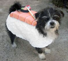 Sushi anyone?? #pets #dogs #costumes