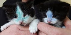 Two little kittens, dyed with marker, saved in extremis