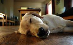 Stefano Benni - E poi, c'è Pisolo, il cane di famiglia  I piu' adorabili dei cani..... ♥♥♥  #StefanoBenni #animali #cani #umorismo #citazioni #Pisolo