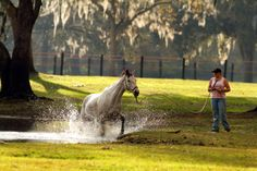 Have some FUN with your horse today! www.parelli.com