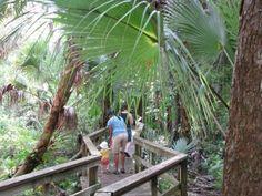 Hidden Sarasota: Crowley Museum and Nature Center