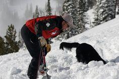Ski Patrol The Movie Ski patrol dog