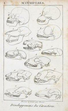 c.1, t.2 - Traité élémentaire d'histoire naturelle / - Biodiversity Heritage Library