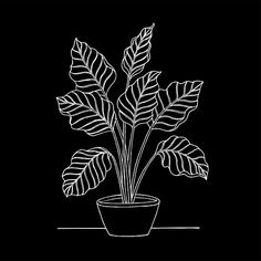 'Caladium Plant Black and White' Canvas Print by studioVII Black And White Stickers, Black And White Posters, Black And White Canvas, Black And White Drawing, Black And White Illustration, Vintage Illustration Art, Illustration Art Drawing, Simple Illustration, Fantasy Illustration