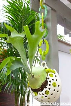 How to Mount a Stag Horn Fern, these plants look amazing as indoor living wall art! Indoor Gardening Supplies, Container Gardening, Gardening Tips, Gardening Vegetables, Vegetable Garden, Amazing Gardens, Beautiful Gardens, Garden Junk, Garden Pots