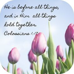 He is before all things, and in Him all things hold together. Colossians 1:17