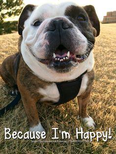 09Mar16 Fenway - Bulldogs - Happy - Smiles