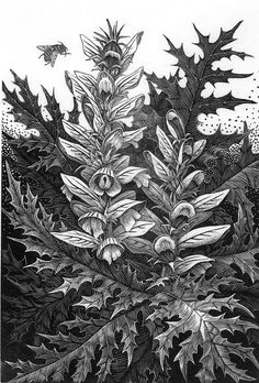 From our Gallery Curator, Kathee Kiesselbach: Artists from the Society of Wood Engravers (UK) and the Wood Engravers' Network (US and abroad) and others, including Miriam Macgregor, Ann Tout, Geri Waddington, Andy English, Sue Scullard, Josh Capistrant, and Abigail Rorer, present traditional garden themes in this fine exhibit of wood engravings. This is a rare opportunity to see their work gathered together for this lovely summer show. Show runs June 7 through July 14.