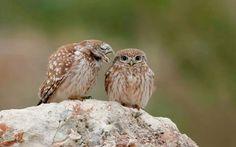 yess, whisper that love words to me baby ٩(♡ε♡ )۶ ー love bird lol