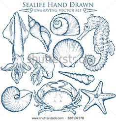 Seashell, sea shell, starfish nature sea ocean wild aquatic underwater vector se… – Biz Graeff - Touching and Emotional Image Drawing Sketches, Art Drawings, Sketching, Gravure Illustration, Ocean Illustration, Engraving Illustration, Nature Tattoos, Sea And Ocean, Ocean Art