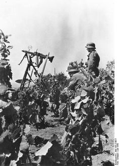 An MG-42 set up as a defence against low flying aircraft in a Sicilian vineyard, July 1943.