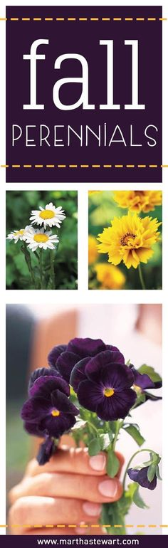 Perennials are a good investment because they come up each year. Here's a list of some autumn beauties.