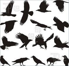 Illustration of black isolated silhouettes of carrion crow on the white background vector art, clipart and stock vectors. Hirsch Silhouette, Vogel Silhouette, Crow Silhouette, Silhouette Drawings, Crow Pictures, Crow Images, Bing Images, Crow Photos, Crow Logo