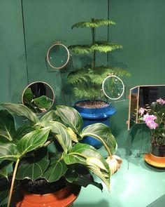 """Wild & vegetal !  Dossofiorito voit la vie en vert - Hall 7 #mo16 #interiordesign #decor #interior #maisonobjet #maisonetobjet"""
