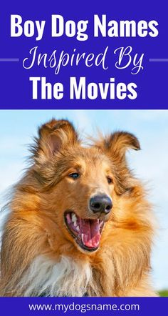It doesn't matter if you're a movie buff or the occasional film fan, these boy dog names are AWESOME! It's the ultimate list of boy dog names inspired by movies.