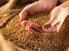 12 Ancient Grains You May Have Never Tried  Add some of these delicious grains to your diet for a variety of nutrients.