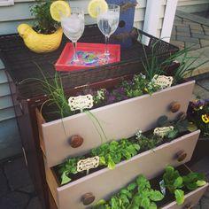 Repurpose an old dresser as an herb garden. #DIY #firstherbgarden #repurpose