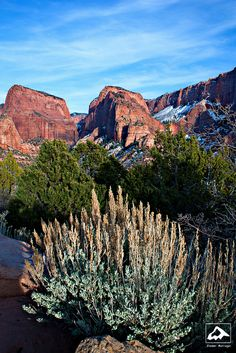 Sunset in Kolob Canyons - Zion National Park, Utah Utah Vacation, Vacation Places, Zion National Park, National Parks, Utah Red Rocks, Kolob Canyon, Sunset Pictures, State Parks, Places To See