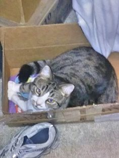 Dolly finds new places to sleep we got her a nice cat bed 2 years ago and  she sleeps in boxes
