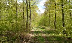 Frühlingswald und der Kuckuck ruft