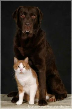 Hessel and Hannes