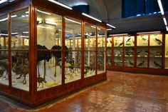 Florencia Museo de historia natural