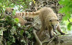 Cultivos ecológicos de café y plátano se vuelven hogar de animales silvestres