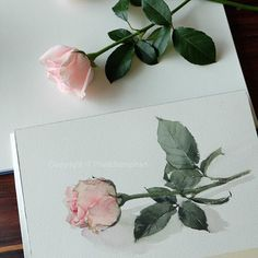 One-layer technique  #watercolor #paint #painting #art #artist #rose #one #layer
