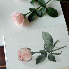 43 Ideas for painting techniques layered Watercolor Rose, Watercolor Cards, Watercolour Painting, Painting & Drawing, Watercolors, Watercolor Techniques, Art Techniques, Foto Art, Botanical Art