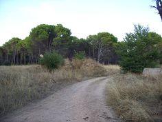 SDC10677, Nature, Pinar Vadohondo, Tinajas, Bodega D.Martín (Villarrobledo, Albacete, España, 7-14 Septiembre, 2013).