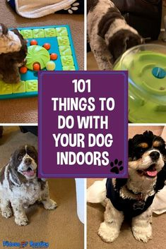 101 Things To Do Indoors With Your Dog - Fidose of Reality Dog Enrichment, Dog Minding, Dog Activities, Indoor Activities, Dog Games, R Dogs, Training Your Dog, Training Tips, Dog Quotes
