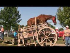 HORSE- POWERED GRAIN SEPARATOR > 1 PS-An-Trieb