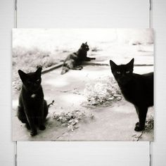 This Black Cats Photograph is from my days wandering the streets of Buenos Aires, visiting the homeless cats around the city. There were just a few of the neighborhood cats in Palermo, Argentina. A rowdy bunch of black tom cats with unparalleled attitudes. A great gift for any cat lover and $10 of each sale goes to the animal charity of your choosing.